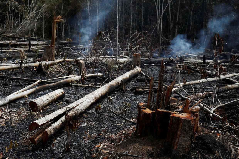 Flere end 73.000 brande har raseret i Brasilien i år. Flere end halvdelen er gået ud over Amazonas.