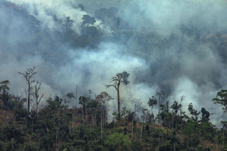 Alene fra torsdag til fredag er omkring 1663 brande blusset op i Amazonas-regnskoven, viser nye data fra det brasilianske rumforskningsinstitut INPE. Victor Moriyama/Ritzau Scanpix