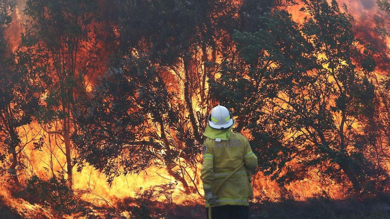 Store Brande Haerger Australiens Ostkyst Bt Udland Www Bt Dk
