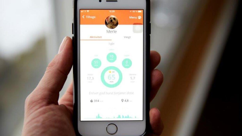 Data fra Pitpat sendes dagligt til en app, så hundeejeren kan følge med i, om hunden har fået nok motion og nået dagens mål. Foto: PR.