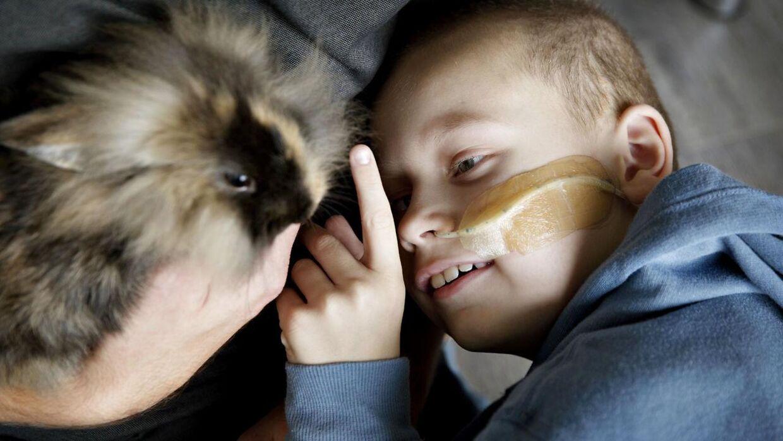 7-årige Magnus Funder Nielsen er meget glad for sin kanin, Fritz.