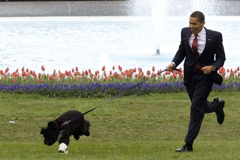 Barack Obama får ig en løbetur sammen med en af familiens to hunde, Bo.
