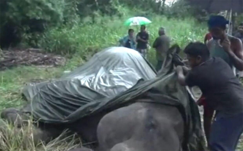 Elefanten Kanakota døde af udmattelse.