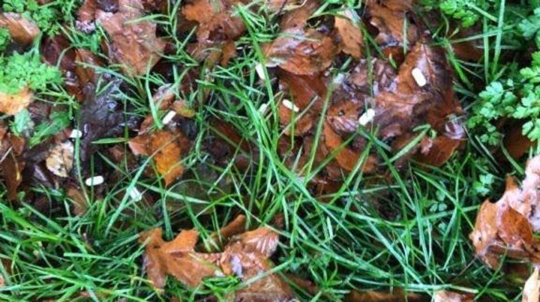De lå næsten på række i græsset.