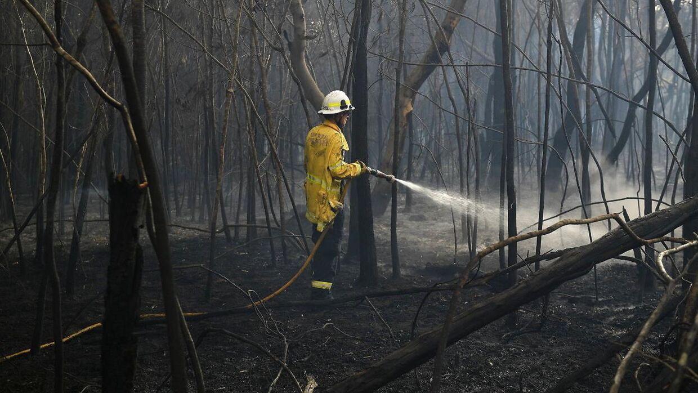 Her ses en brandmand i South Turramurra, tæt ved Sydney, New South Wales, Australia, den 12 November 2019.