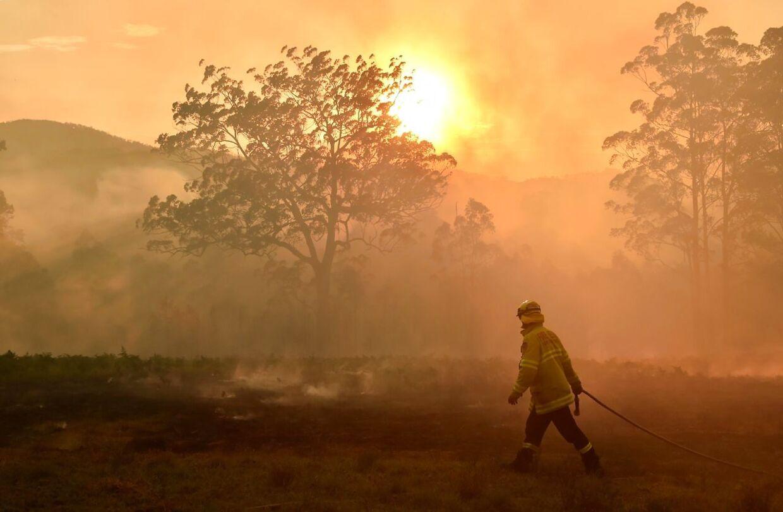 En brandmand forsvarer et stykke land ved Hillville nær Taree, 350 km nord for Sydney.