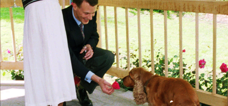 Det er denne velfriserede Cockerspaniel Oscar der inden sin død fik tappet sæd. Flere år efter sin død blev Oscar far til den nuværende hofhund Winston.