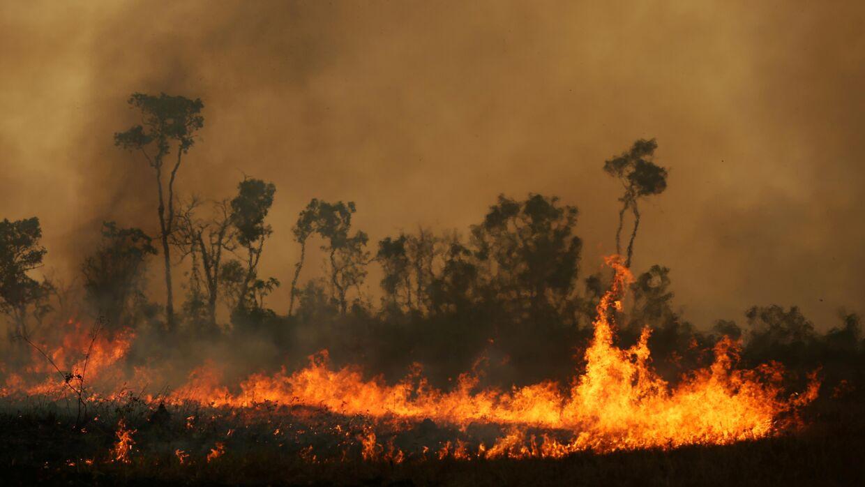 Arkivfoto. Amazonas har været hårdt ramt af skovbrænde den seneste tid.
