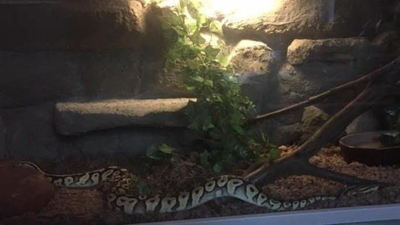 Her kan du se slangen, der er sluppet løs.