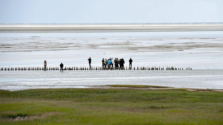 DMI varsler risiko for forhøjet vandstand i området omrking Vadehavet.