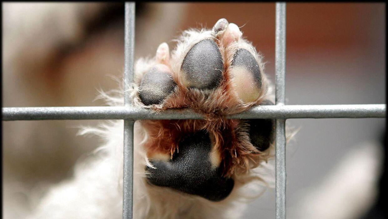 En hund, racen er usikker, blev glemt af sin ejer og overnattede i regn og blæst ude foran Rema 1000 i Hedensted.