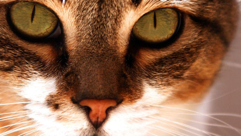 En sag om en afdød kat udviklede sig dramatisk i Odense fredag. ARKIVFOTO.