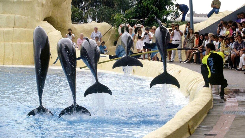 Du bør helt droppe delfinshows på din rejse.