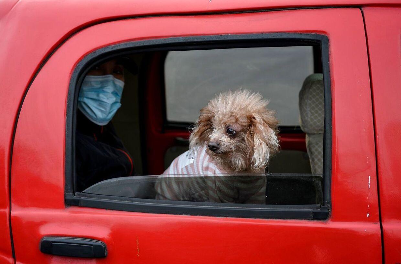 En mand med ansigtsmaske sidder i en bil med sin hund i Beijing.