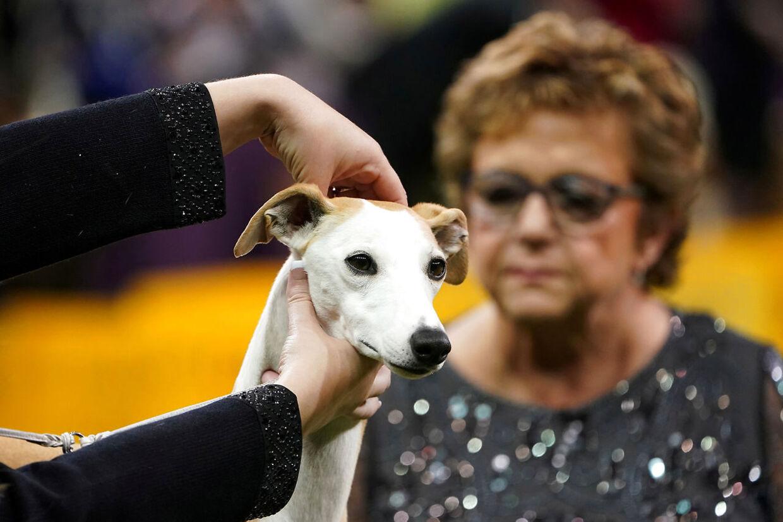 En whippet ved navn Bourbon blev den næstbedste hund ved showet.