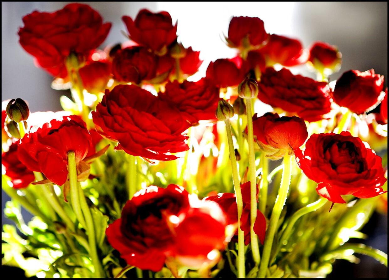 Mange har tilsyneladende lyst til at sende en blomsterhilsen under coronakrisen. (Arkivfoto)