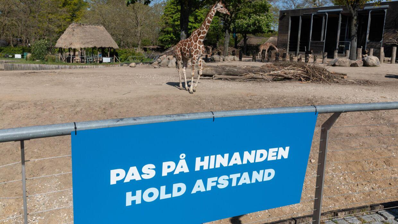 København Zoo måtte holde lukket fra 18. marts og frem til juni på grund af coronakrisen. Og det har tydeligvis ramt hårdt rent økonomisk.