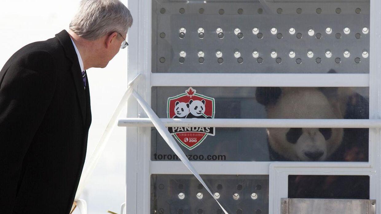 Arkivfoto af pandaerne, fra da de ankommer til Canada.