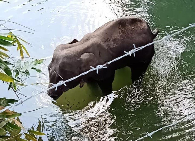 Den sårede elefant begav sig ud i floden Velliyar, hvor den til sidst døde.