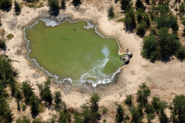 En elefant er blevet fundet død ved et vandhul i Okavango Deltaet i Botswana. Photographs Obtained By Reuters/Reuters