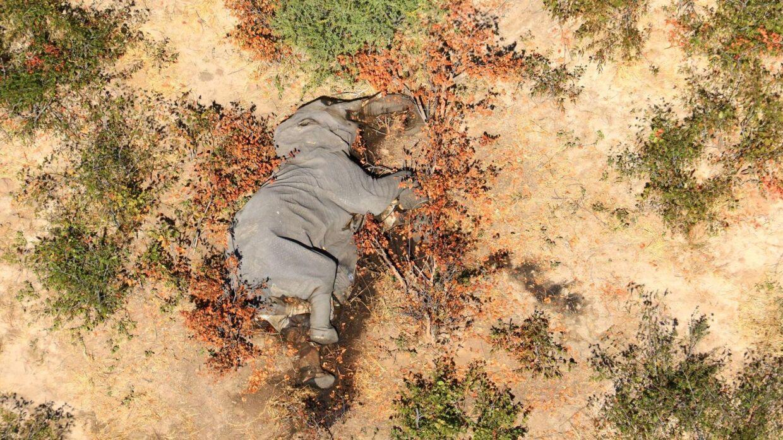 Flere end 350 er blevet fundet døde i Botswana i det sydlige Afrika de seneste tre måneder. Photographs Obtained By Reuters/Reuters