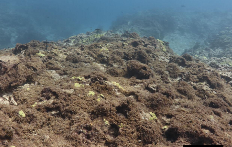 Den nye tang dækker havets bund.