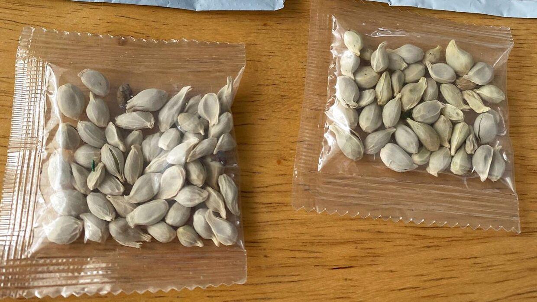 En pakke med frø er her beslaglagt i Washington. De er afsendt fra Kina til en privatperson.