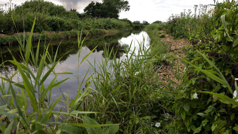 Snogen befinder sig især ved våde enge, moser og vådområder i Danmark