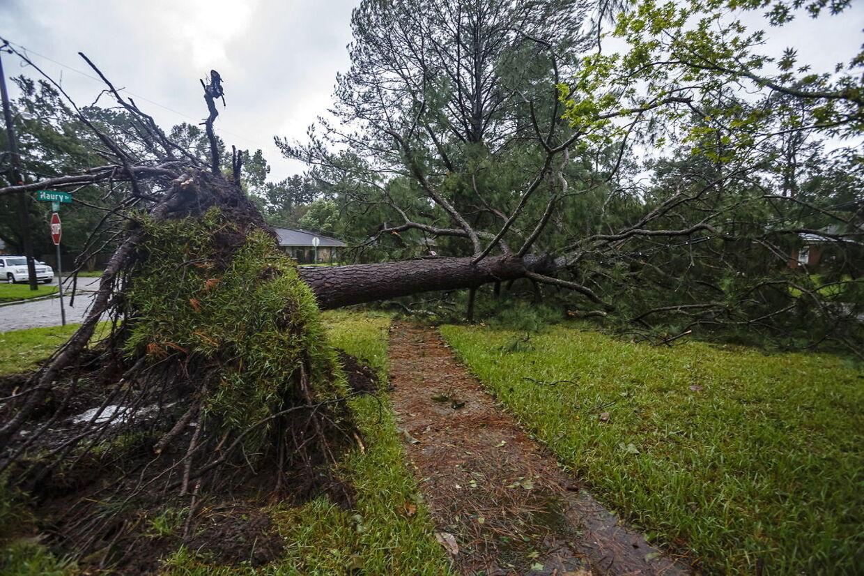 Et træ i byen Mobile i Alabama er rykket op med rode.