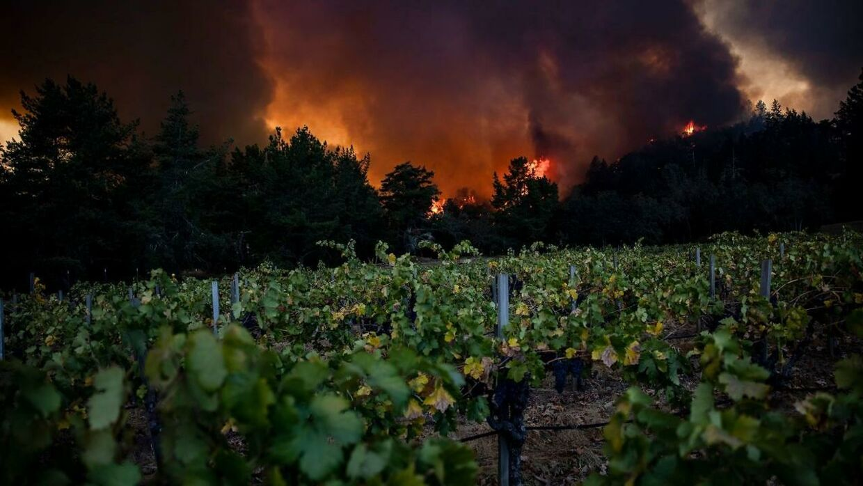 Vinmarkerne i Napa Valley bliver overskygget af den voldsomme brand, der hærger området.