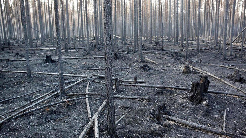 Ødelæggelse af naturlige habitater har betydet, at flere og flere plante- og svampearter risikerer at uddø.