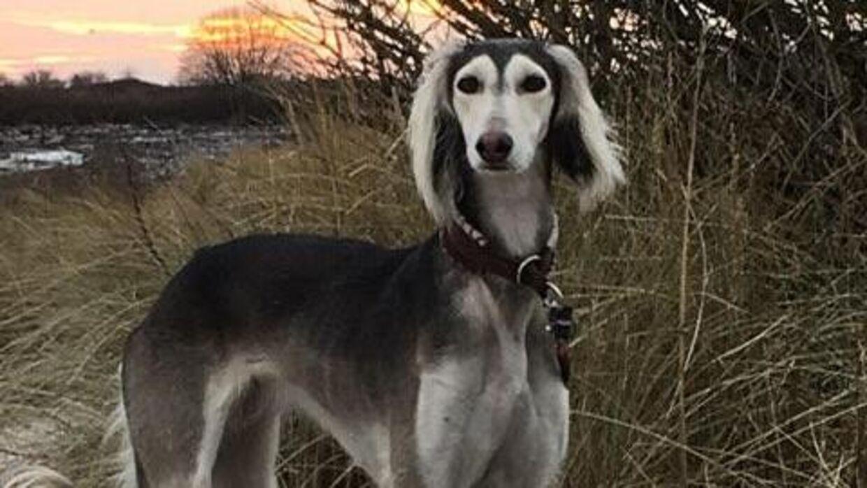 Den seksårige mynde Mella er én af de hunde, som pludselig døde under mystiske omstændigheder.