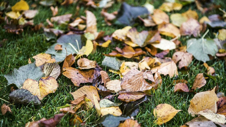 Efteråret er til den lune side, og det bliver ved et stykke tid endnu, lyder det fra DMI. (Arkivfoto)