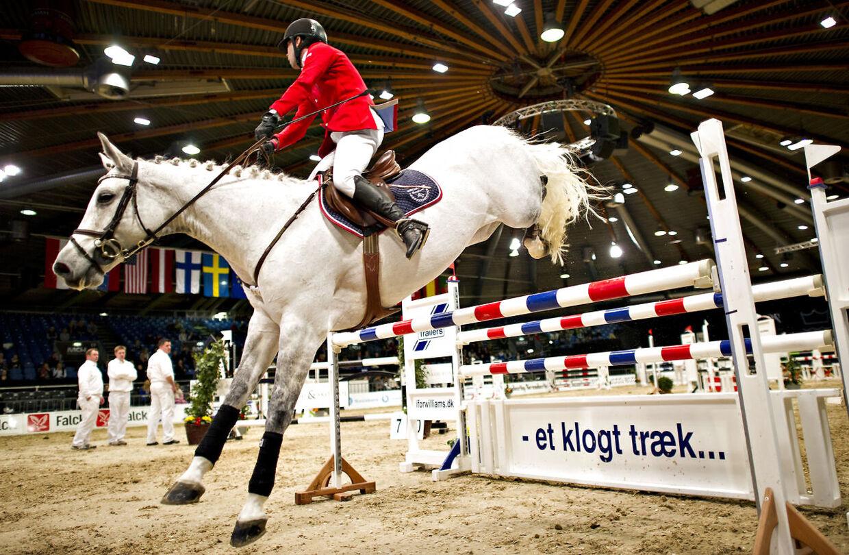 Dansk Varmblod - Hingstekåring 2012 Herning Messe Center. Heste interesserede fra hele landet var i weekenden samlet i Herning til at se på heste og udstyr. Derudover konkurrere i forskellige konkurrencer.