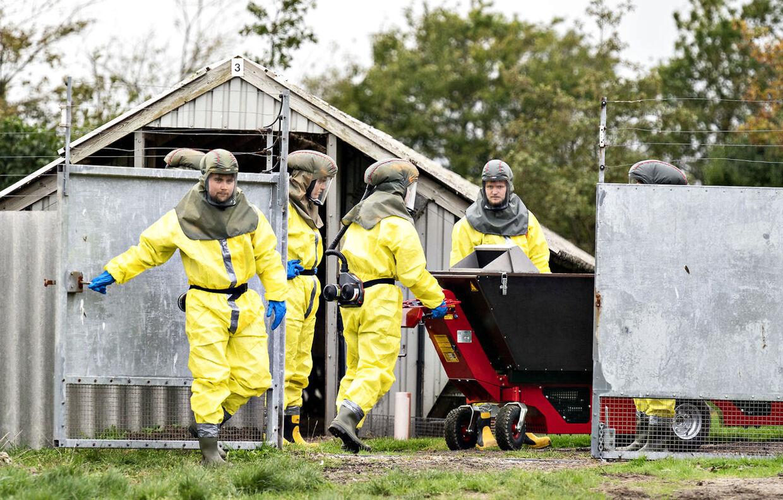 Arkiv. Alle mink i Danmark blev beordret aflivet, selv om der der ikke var lovhjemmel til det. Politiet fortsatte med at lægge pres på minkavlerne, også efter det var klart, at det var ulovligt at beordre minkene slået ned.