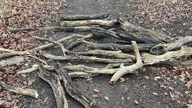 Det er disse grene Ludolf Petersen har fundet over en længere periode, der kan være til stærk gene for cyklister og svært gående.