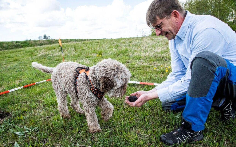 Både Rune Richtendorff og hunden Asti elsker at træne kunsten at finde trøfler. Foto: Sara Skytte.