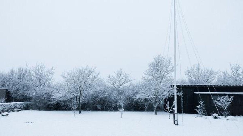 Sneen kom til Nordjylland først onsdag morgen. Sådan så det ud i en have.