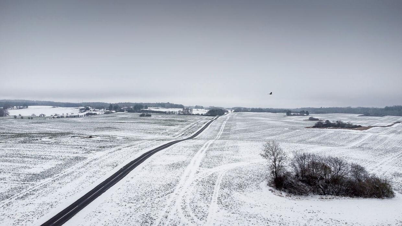 Sne pryder landskabet over Midtsjælland, fredag den 8. januar 2021.(Foto: Mads Claus Rasmussen/Ritzau Scanpix)