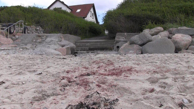 Her blev hesten fundet dræbt. Der var dagen efter fortsat tydelige blodspor i sandet.