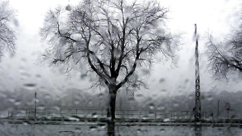 Det bliver en våd og blæsende dag. I det hele taget minder vejret mere om efterår, end om januar. (Arkivfoto)