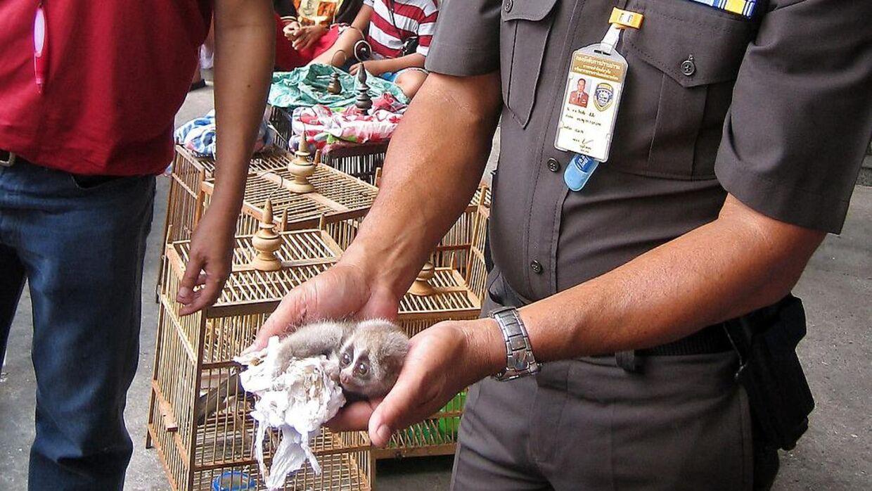 Det er ikke kun WHO, der holder øje med markedet i Bangkook. Her er Royal Thai police på besøg for at ungersøge efter ulovlig handel med vilde dyr.