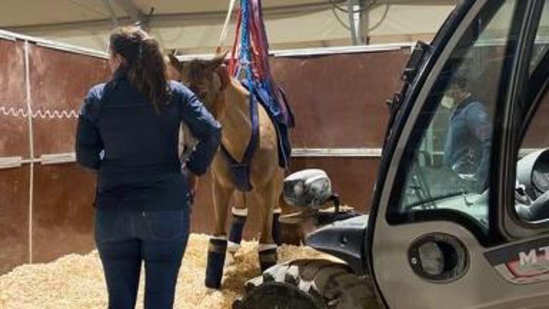 Virussen har ramt hestene så hårdt, at de ikke kan stå op uden hjælp.