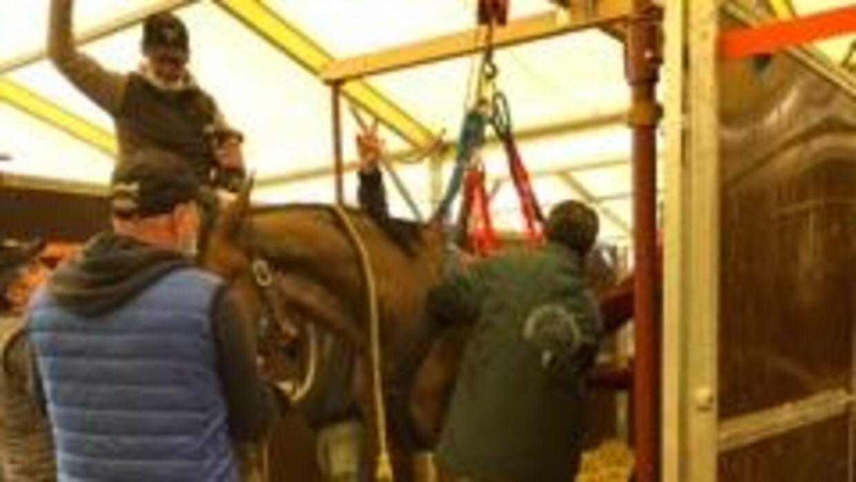 »I går var der tre heste, der døde, og jeg kørte to heste på et dyrehospital, som har lavet ekstra pladser. Vi havde fire syge i går, nu har vi fem syge heste. Den her virus er så aggressiv,« forklarer Kirsten Rie Truelsen.