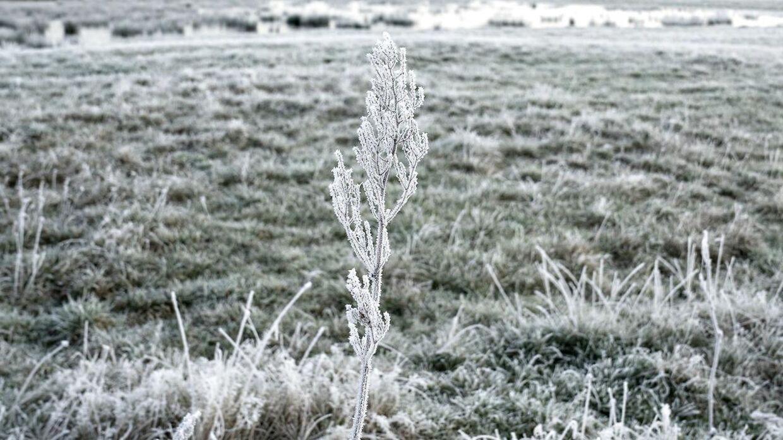 Danmark er igen ramt af frostvejr.