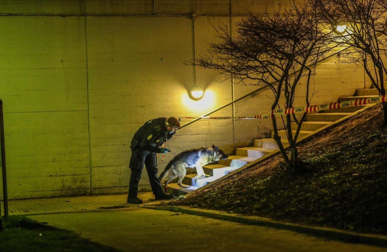 Københavns Vestegns Politi rykkede fredag aften ud til et knivstikkere i Kisumparken i Brøndby. Foto: Presse-fotos.dk