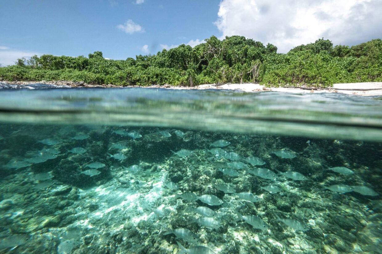 Cousin Island, Seychellerne.