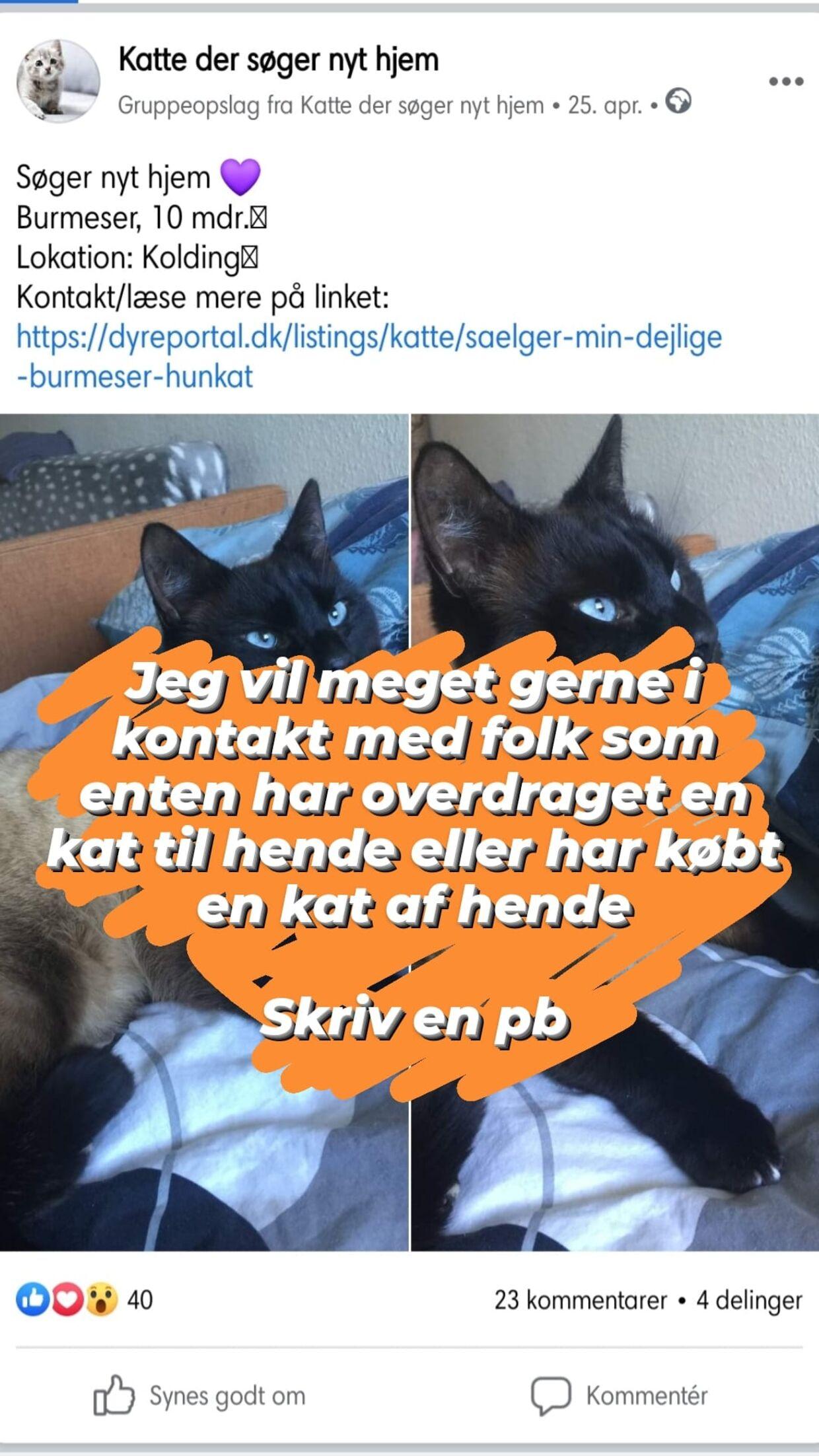 Her er opslaget af katten, som Nikita Elisabeth Lorenzen ikke kunne stå for.