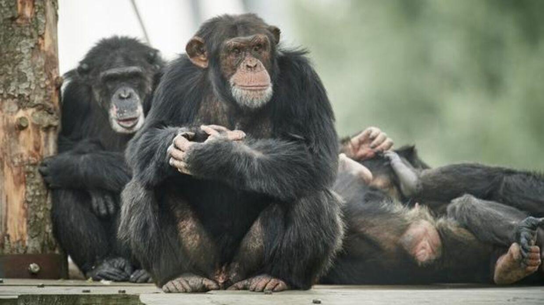Der var drama i Odense Zoo søndag.