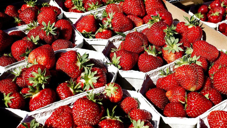 Længes du efter de søde, røde bær? Det kolde forår har forsinket jordbærrene.